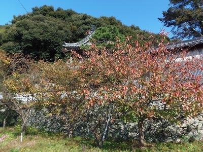 西圓寺山門と秋色3.jpg