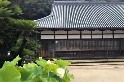 西圓寺本堂2.jpg