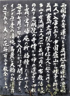 西圓寺青蓮説明.jpg