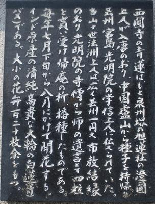 西圓寺青蓮説明碑2.jpg