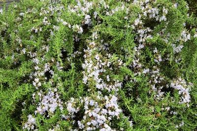 西本さんの季節の花1.jpg