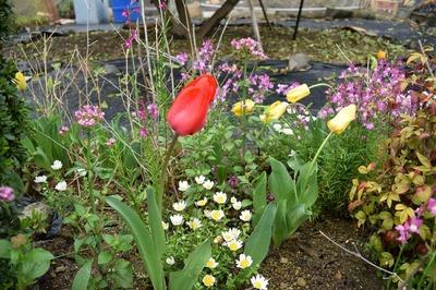 西本さんの季節の花2.jpg