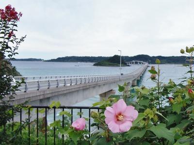 角島大橋と芙蓉の花4.9.12.jpg