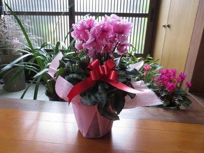 誕生日の花3.12.26.jpg
