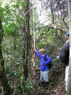 調査区内立木寸法測定6.jpg