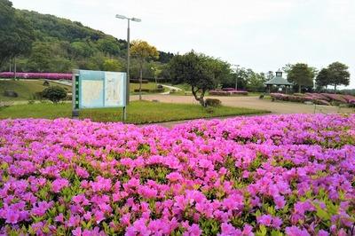 請川公園1.jpg