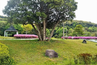 請川公園3.jpg