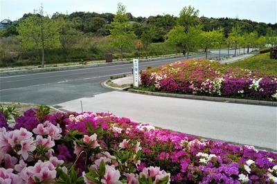 請川公園入口.jpg