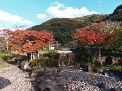 近松道路公園の秋色1.jpg