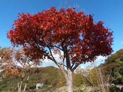 近松道路公園の秋色2.jpg