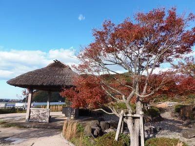 近松道路公園の秋色3.jpg