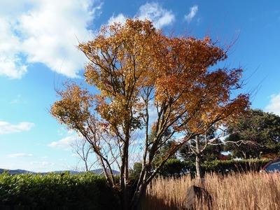 近松道路公園の秋色4.jpg