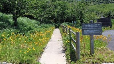 遊歩道と季節の花.jpg