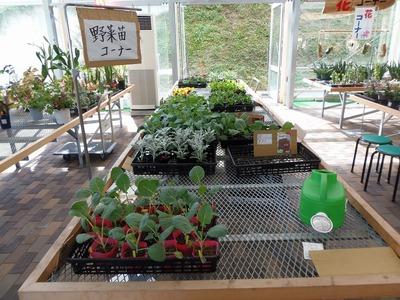 野菜苗コーナー.jpg