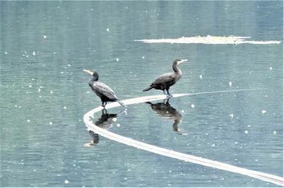 野鳥3.jpg