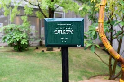 金明孟宗竹1.jpg