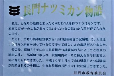 長門ナツミカン物語.jpg