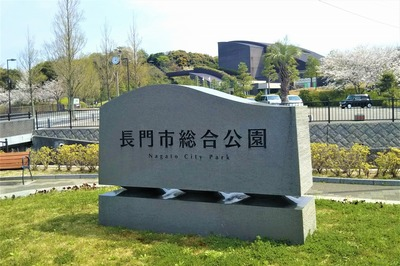 長門市総合公園の桜1.jpg