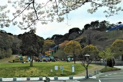 長門市総合公園の桜6.jpg