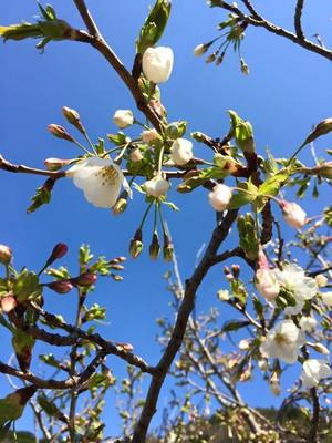 開花.jpg