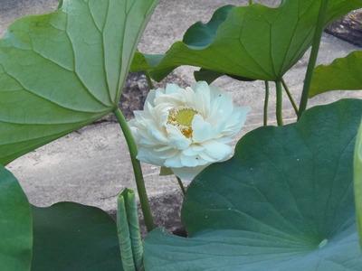 開花1.jpg