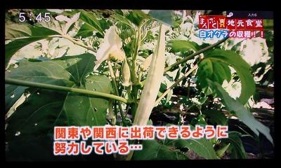 関東や関西への出荷計画.jpg