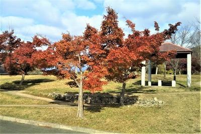 陶芸の村公園の紅葉1.jpg