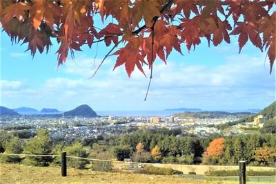 陶芸の村公園の紅葉4.jpg