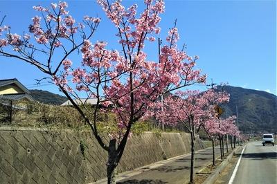 陽光桜2.jpg