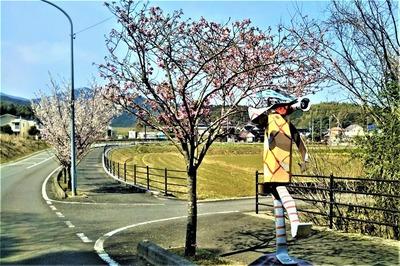 陽光桜8.jpg