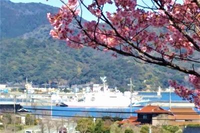 陽光桜と巡視船おおみ.jpg