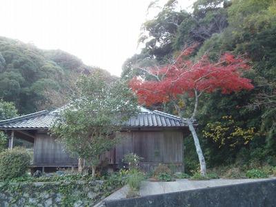 隠居所の紅葉2.jpg