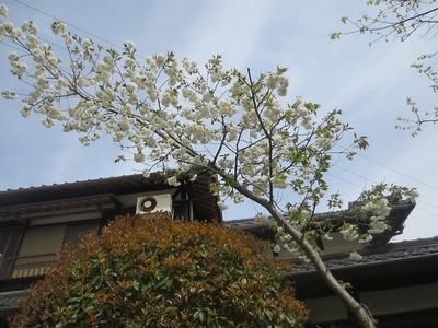 青海さんの花.jpg