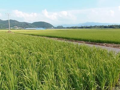 青海の田んぼ1.jpg