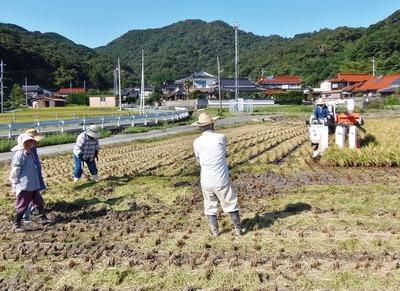 青海の稲刈り3.jpg