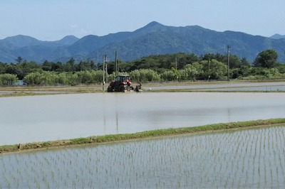 青海地区の田植え1.jpg