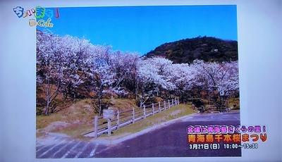 青海島さくらの里.jpg