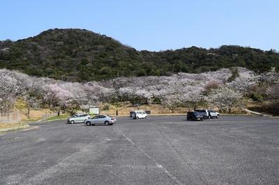 青海島さくらの里3.jpg