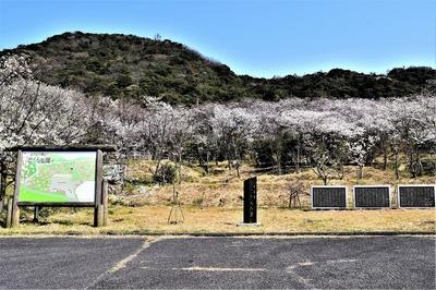 青海島さくらの里4.jpg
