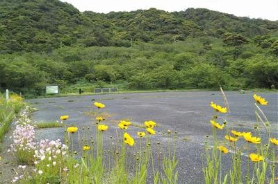 青海島さくらの里と季節の花1.jpg