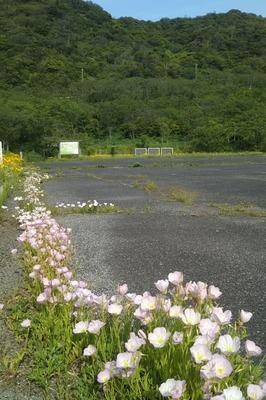 青海島さくらの里の5.jpg