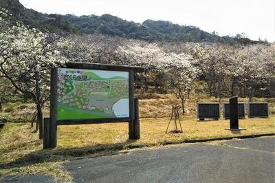 青海島さくらの里の看板と桜1.jpg