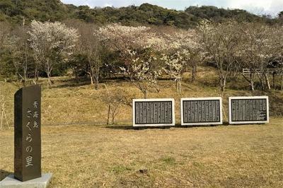青海島さくらの里の石碑.jpg