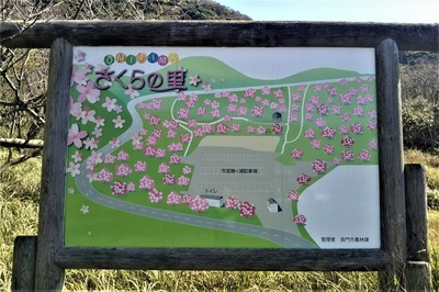 青海島さくらの里案内図.jpg