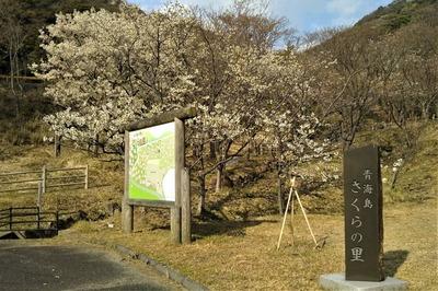 青海島さくらの里看板.jpg