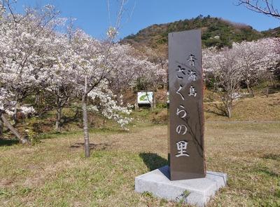 青海島さくらの里石柱.jpg