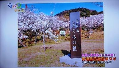 青海島さくらの里碑.jpg