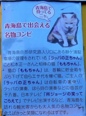 青海島で出会える名物コンビ.jpg