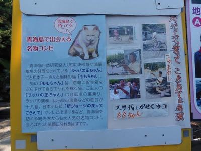青海島で出会える名物コンビ説明.jpg