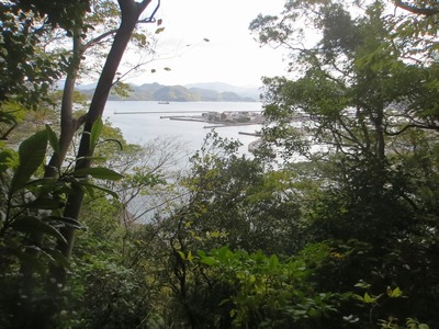 青海島タチバナ1.jpg